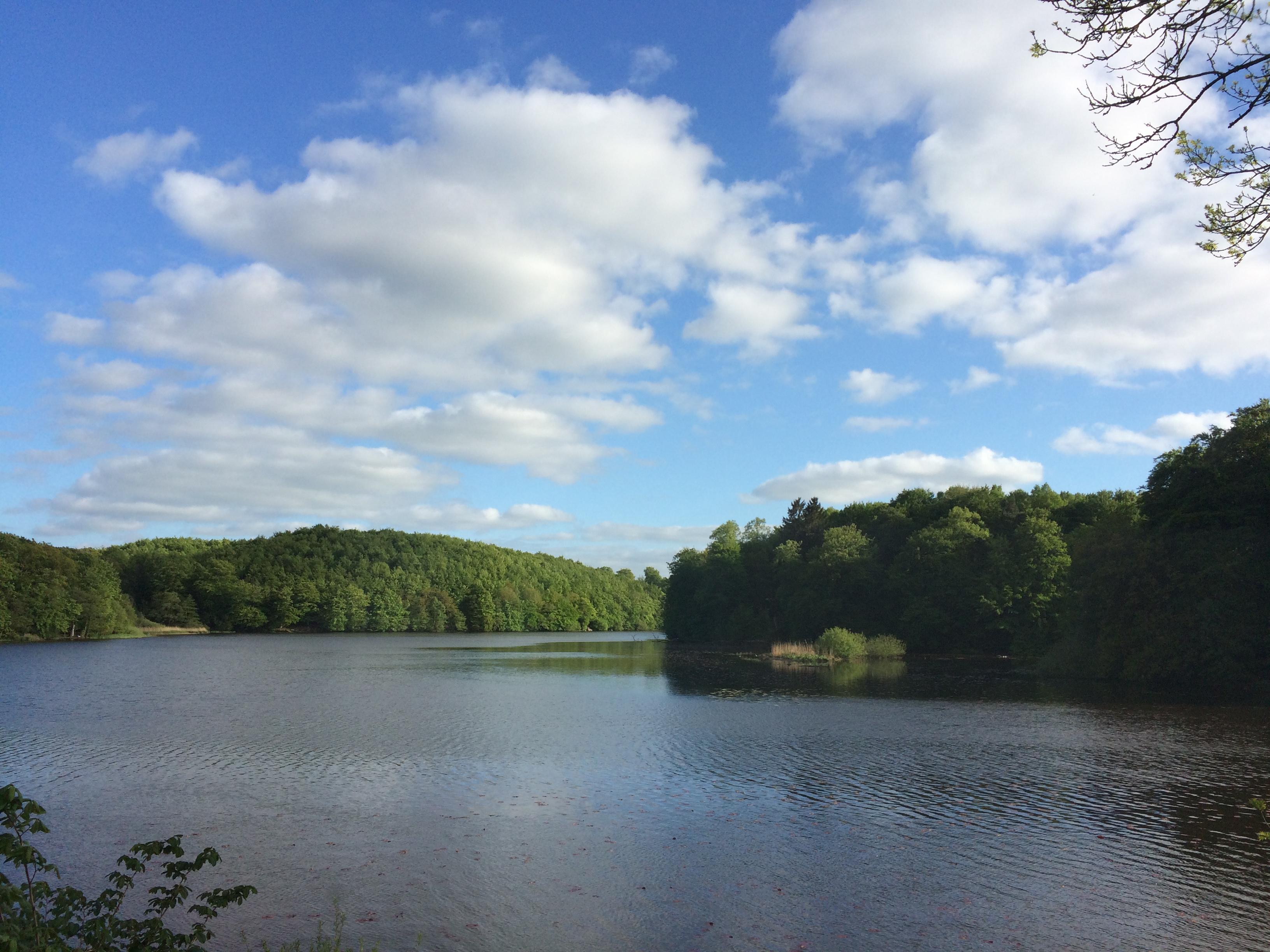sjö skog himmel
